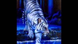 wilki i tygrysy