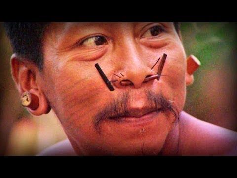 Amazonia: Land of Jaguars (full documentary)