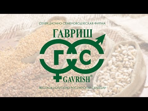 «Гавриш» — селекционно-семеноводческая фирма