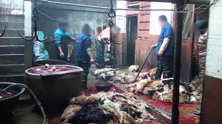 REVEALED: Dogs Skinned Alive for Leather
