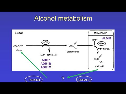 CARTA: Altered States of the Human Mind: Alcohol Metabolism and Alcoholism
