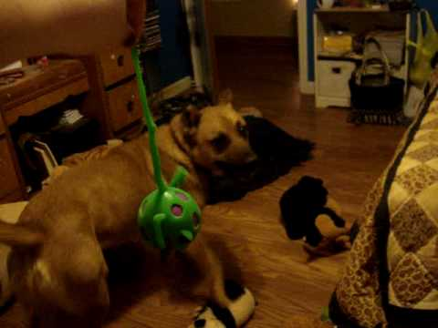 Dogs love frogs...and rubber toys. - YouTube