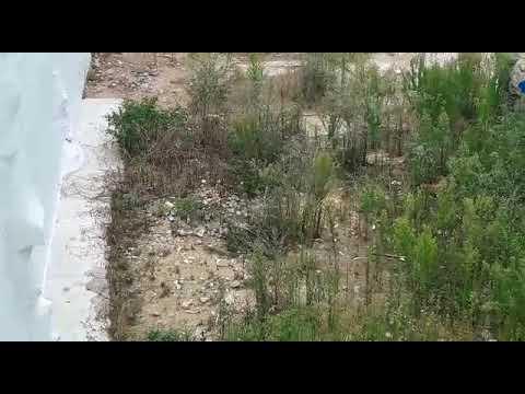 Los vecinos de Santoña siguen sufriendo una plaga de ratas