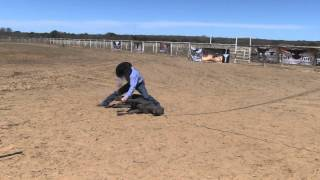 Calf Roping Dummy, Tuf Kaf Is Used By Senior Pro