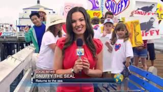 Tiburón se come a foca cuando estaban liberándola