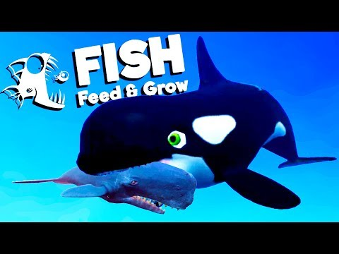 Ocean's Largest Killer Whale Attacks Sperm Whales! - Feed and Grow Fish Gameplay