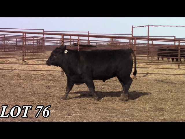 Mead Angus Farms Lot 76