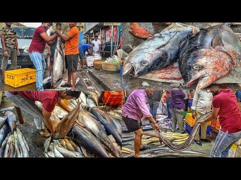 बडी मछली का बाजार |Big Fish Market CST Mumbai