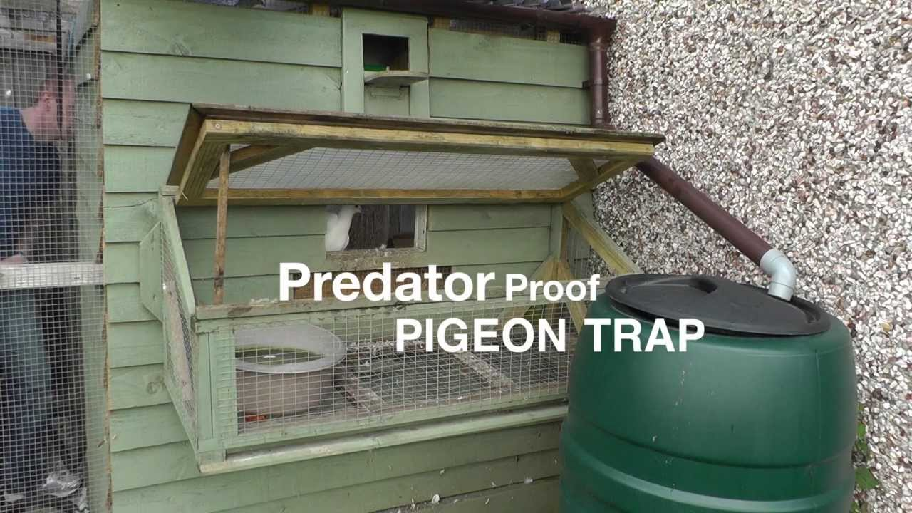 Trap Doors In Houses Clever Pigeon Loft Trap Door Design  Youtube