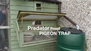 Clever Pigeon Loft Trap Door Design