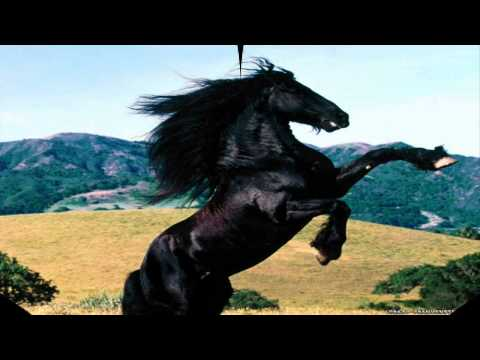 pferde sounds