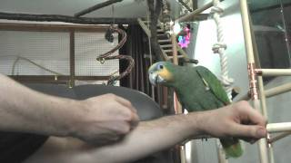 Parrot Training - Step up