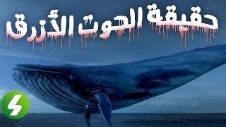 حقيقة لعبة الحوت الأزرق
