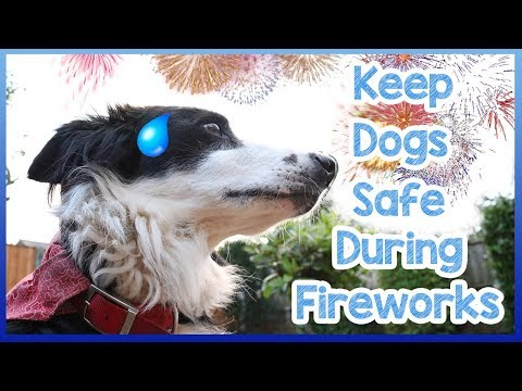 how-to-keep-dogs-safe-during-fireworks!-keep-your-dog-safe-on-bonfire-night-and-thanksgiving!