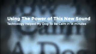 How To Calm A Dog Down In A Storm Or At Night
