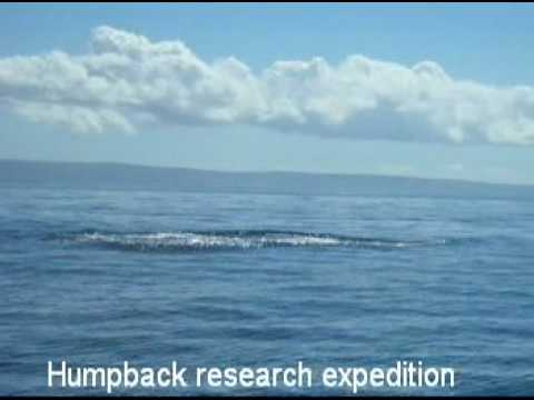 Humpback whale research expedition