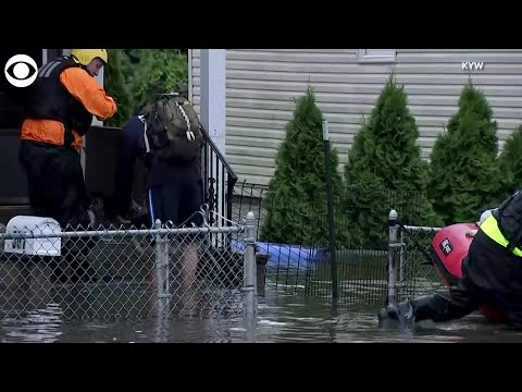 WEB EXTRA: Dogs Rescued From Flooding