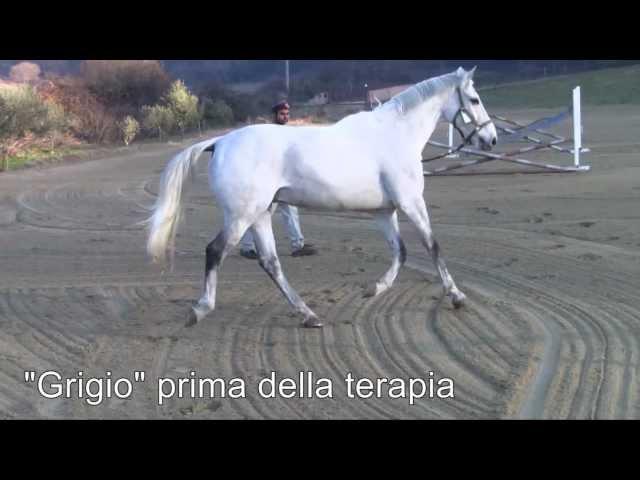 Cavallo con rottura del legamento collaterale - Cellule staminali del sangue