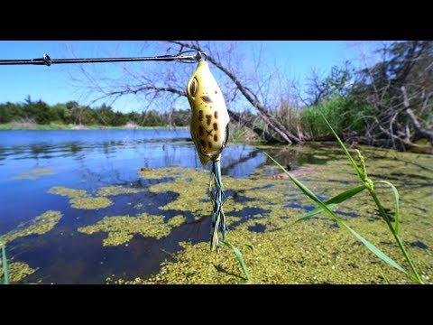 Sunny Mid Day Frog Fishing Challenge!!!