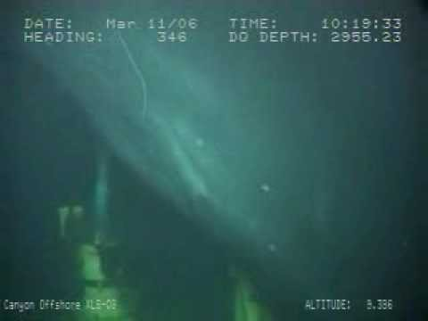 Whale 3000 Meters Deep - Subsea structure