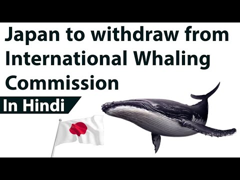 Japan to leave International Whaling Commission, Why Japan wants to resume whale hunting from 2019?