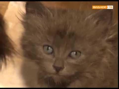 В добрые руки - бездомные котята ищут хозяев