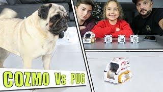 ROBOT COZMO Vs CHIEN et ENFANT Première rencontre avec cozmo pour l...