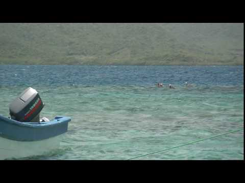 1 pelicans at paradise in HD.AVI