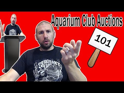 Aquarium Club Auctions- All You Need To Know!