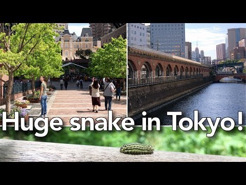 Day out in Tokyo - Institute for Nature Study | Ep. 071 | OurLifeInJapan