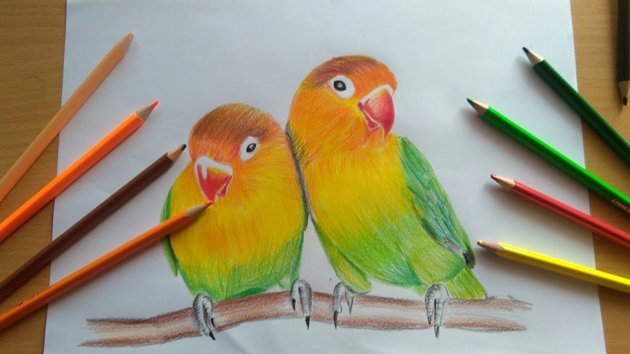 Drawing Love Birds Timelaps Colour Pencils Hac Youtube