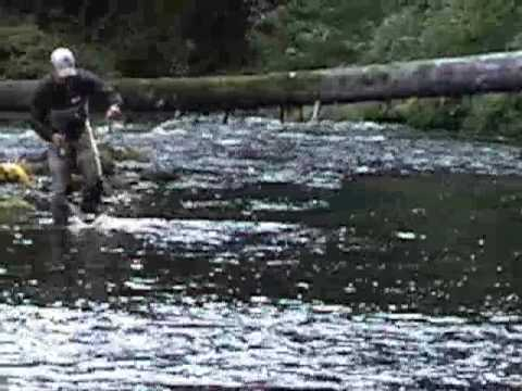Alaska fly fishing salmon run on prince of wales island for Prince of wales island fishing