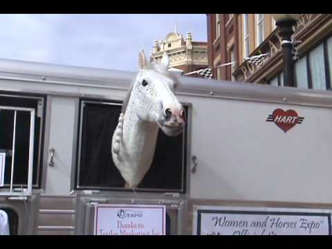 Sonny the Talking Horse