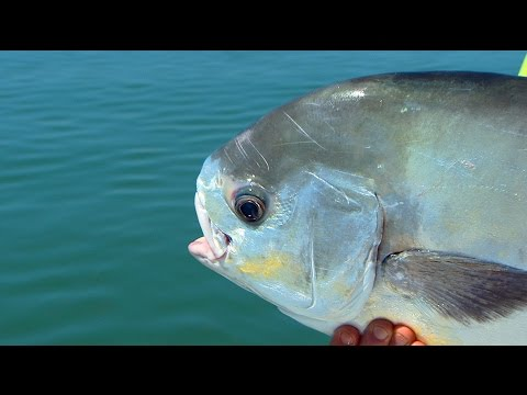 Monster Permit on DOA Fishing Lures in Islamorada Florida Keys