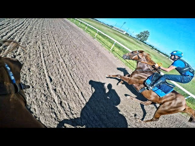 Two Horses going head to head with fast speed | 65,2 Km/H Max Speed | Zwegat | Puramente | GoPro