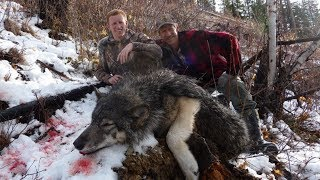 Wolf hunt shot and killed all on video - Stuckntherut