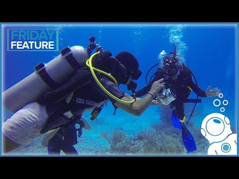 Why Becoming A Dive Master Sucks... (and Also Why It Rules)