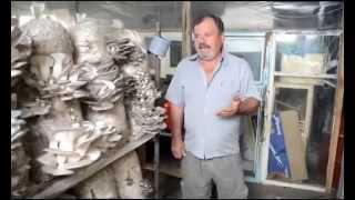 видео Выращивание грибов