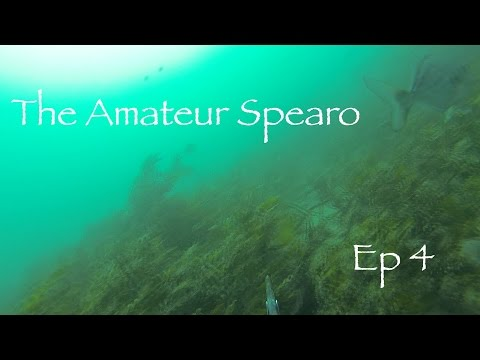 The Amateur Spearo Episode 4