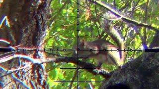 Squirrel Hunting .177 Marauder Scope Cam Air Gun