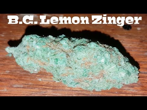 Canadian Cannabis Strain Review - B.C. Lemon Zinger