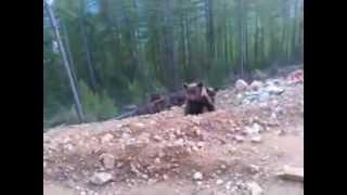 медведи после спячки(, 2012-03-02T10:40:35.000Z)