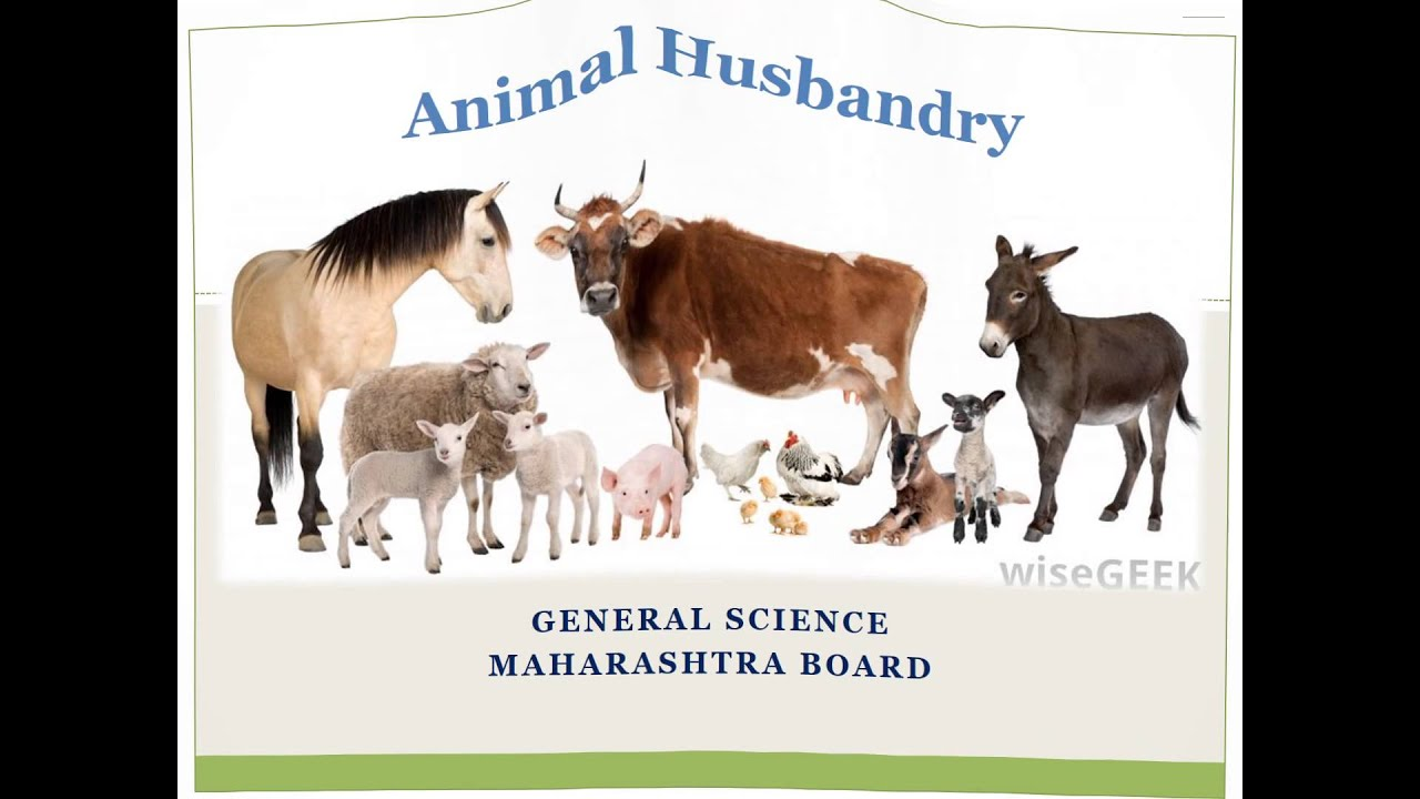 animal husbandary Animal husbandry is the care and breeding of animals, particularly livestockpeople have done this for a very long time it is much older than agriculture nomadic people and people in rural areas often teach their children how to care for their animals 4-h is an organization that also teaches children in the united states how to raise and.