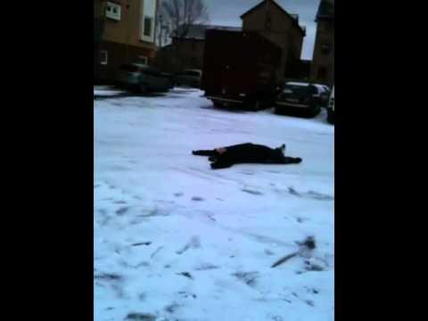 enis snow