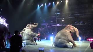 Barnum and Bailey circus 2013 Elephants