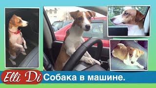 Собака в машине. Перевозка собаки в машине. Как перевезти собаку? Elli Di