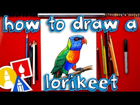 How To Draw A Realistic Rainbow Lorikeet Youtube