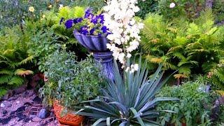 видео Вечнозеленая юкка: уход в домашних условиях