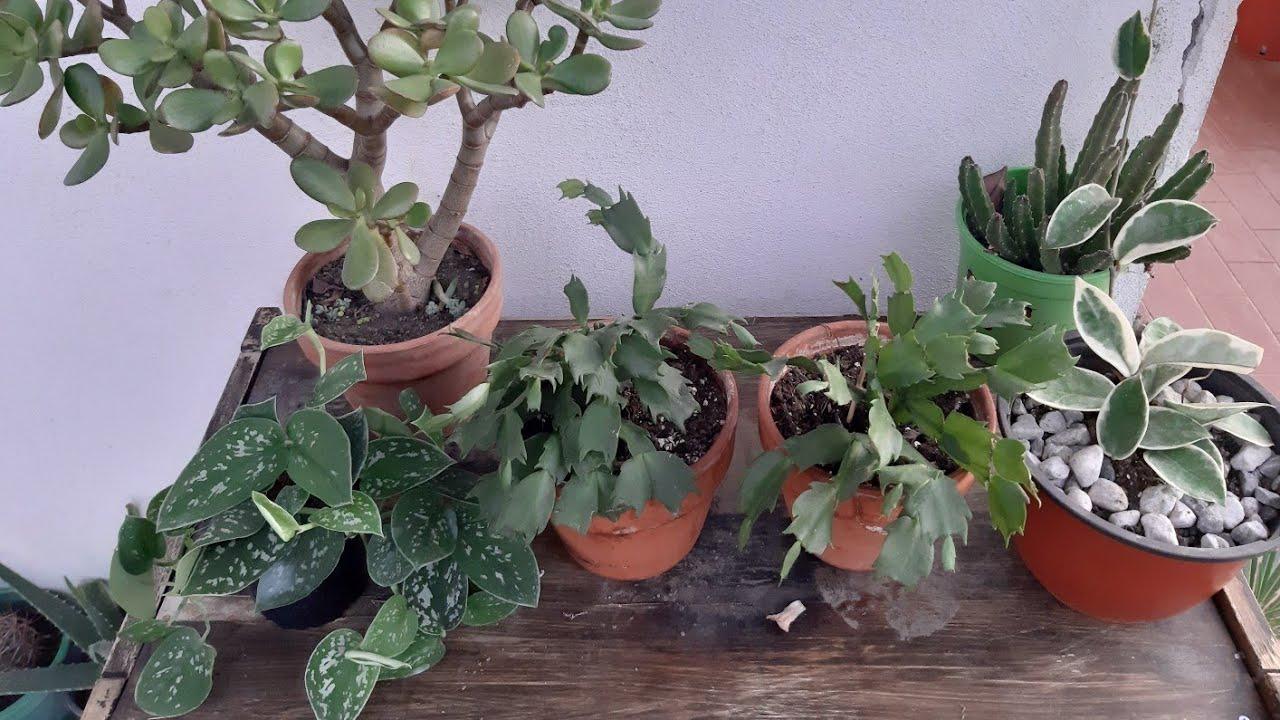 Le mie pianta da interno - YouTube