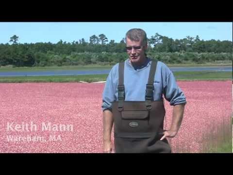 Economic Sustainability and Massachusetts Cranberries